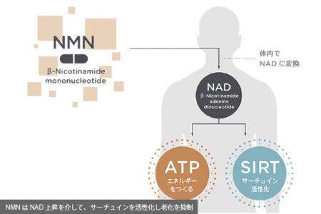 ニコチンアミドモノヌクレオチド