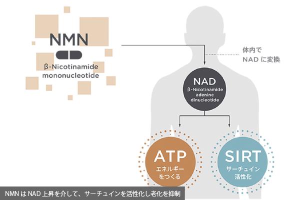 NMN(ニコチンアミドモノヌクレオチド)
